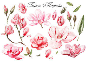 Watercolor set with flowers and leaves of magnolia . illustrations