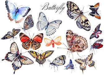 Watercolor set with butterflies . illustrations