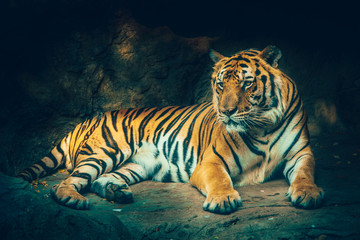tiger with stone mountain background in dark grim majestic dangerous, frightening feeling color effect.