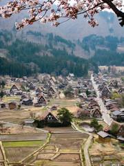 Shirakawa-go, cherry blossom, green forest