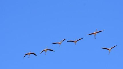 PACK OF FLAMINGOS FLYING IN BLUE SKY