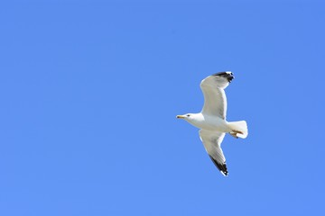 IN FLIGHT PHOTO OF WHITE SEAGULL IN BLUE SKY