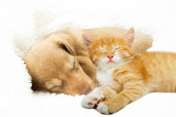 Photo sur Aluminium Chat lovely puppy and ginger kitten sleeping on a white bedspread