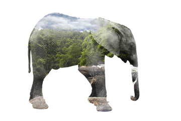 Double exposure elephant and forest