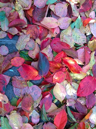 Autunno foglie albero di cachi photo libre de droits for Albero di cachi
