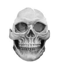 human skull model isolated on white background.