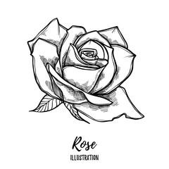 Hand drawn vector illustration - rose. Floral Tattoo sketch.