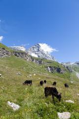 The south face of the Matterhorn/Cervino from the track to the Rifugio Duca degli Abruzzi all'Oriond/Refuge Duc des Abruzzes à l'Oriondé