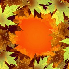 Beautiful colorful maple autumn leaves background.