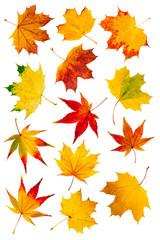 Wall Mural - Bunte Herbstblätter als Collage