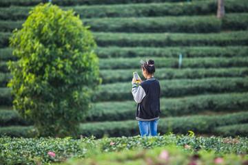 asia girl take a photo at tea farm