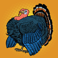 Poultry Turkey, realistic vector illustration
