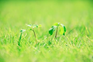 新芽と芝生
