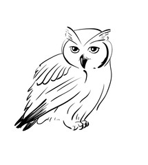 Owl hand drawn, black and white