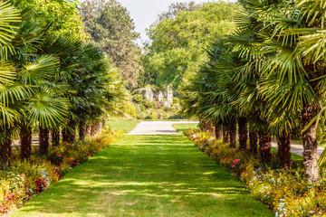 Palmen in der Flora Köln