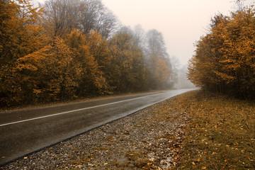 autumn, road, fog