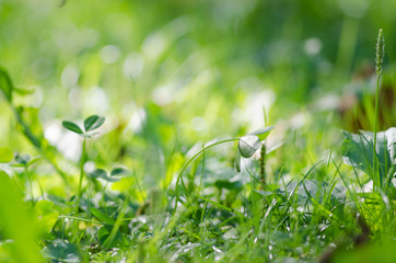 An Image of fresh green leaves. Detail of tiny growing plants. Green grass background