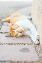 White cat lying on ground