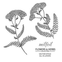 milfoil vector set