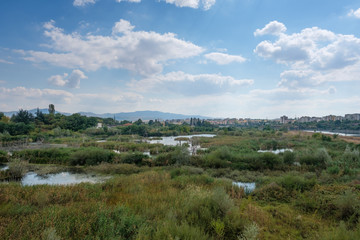 Swampland with Kardzhali, Bulgaria in the background