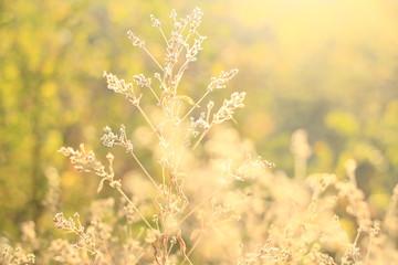 трава на солнце