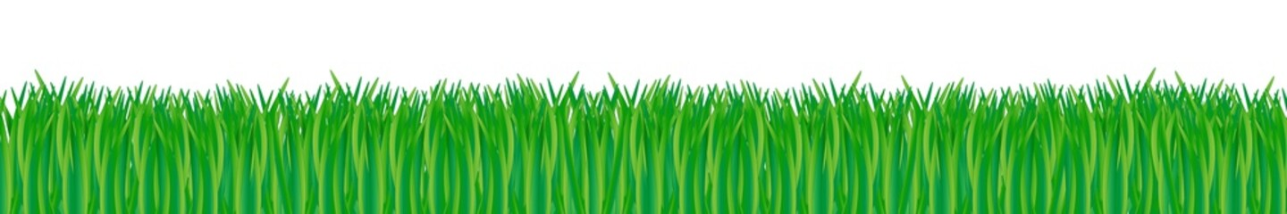 green vector grass meadow isolated on white background