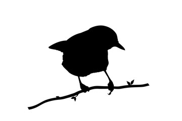 Silhouette bird on white background