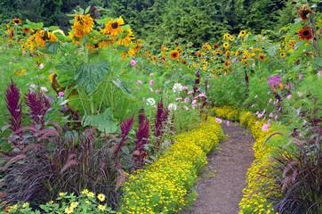 Pathway through colorful sunflower garden