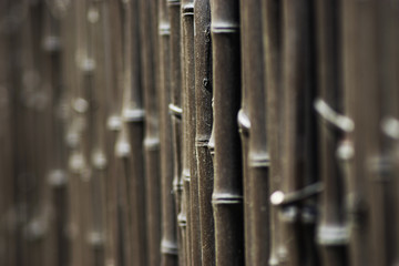 Bamboo fence close up