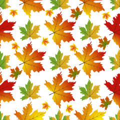 Autumn Set of Orange Maple Leaves vector.