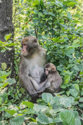 Makake mit Baby