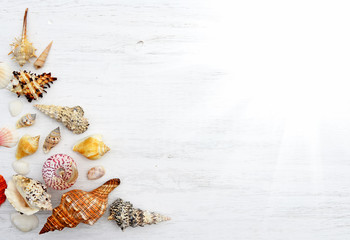 Sea shells on a white wooden background