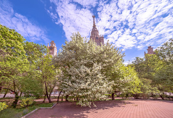 Wide angle view of sunny campus of Moscow university with white blossoming apple trees under blue cloudy sky