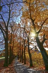 Herbst Sonne Allee