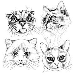 The image Portraits of a cat. Vector illustration.