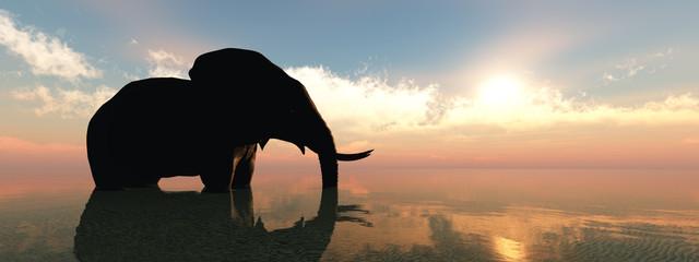 elephant and sunset