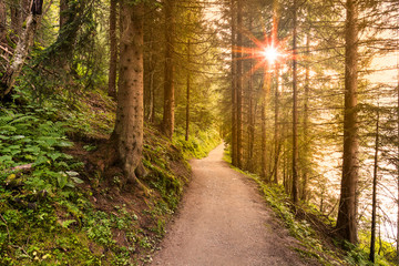 Walking path in forest at morning with beautiful sunbeams.