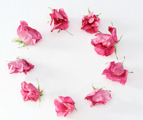 Wreath of Pink Tea roses on white background