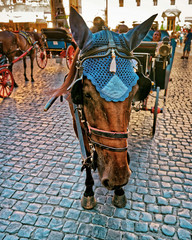 Horse in Carriage in the City Center of Rome