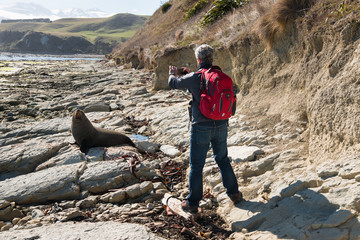 Man taking picture of fur seal with mobile phone