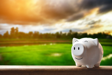 Piggy bank on nature background. Soft focus