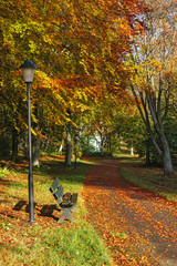 Park Bench at a walking path in the fall