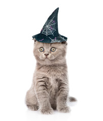 kitten with hat for halloween. isolated on white background