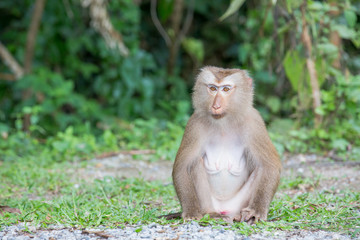 monkey lives in a natural forest of Thailand