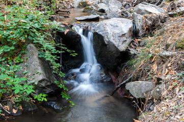 Bosque de castaños con rio
