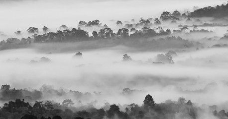 Morning fog in dense tropical rainforest in black and white style, Misty forest landscape at Khao Yai national park