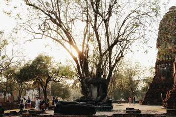 Old buddha statue under the tree - Ayutthaya , Thailand