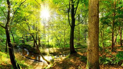 Wald Landschaft im Herbst mit Bach und Sonne