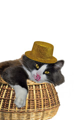 Cat in the golden hat  licking in a basket