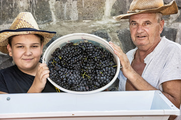 Teenage boy with grandfather strew bunches of grapes to the press